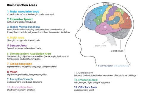 brain section functions brain section functions 28 images veterinary pathology