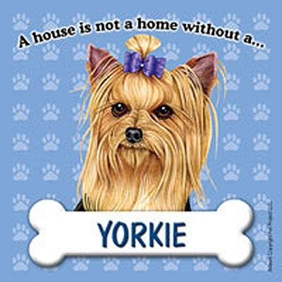 yorkie dog house yorkie dog magnet sign house is not a home bow