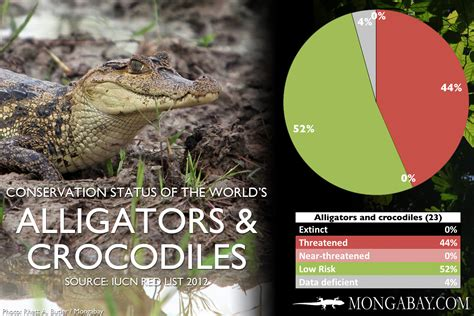 CHART: The world's most endangered crocodiles and alligators