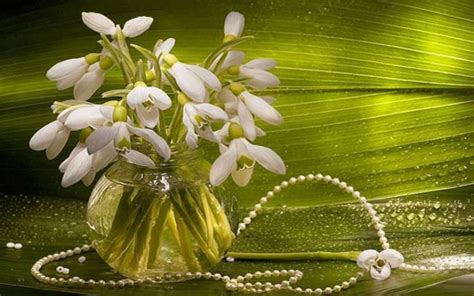 hd snowdrops pearls wallpaper