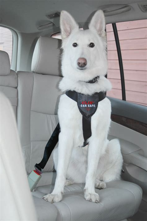 car harness clix car safe harness for dogs