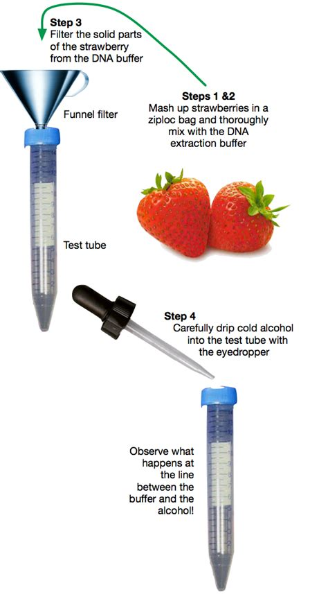 College Admission Resume Objective Examples by Strawberry Dna Extraction Writing A Good College Essay