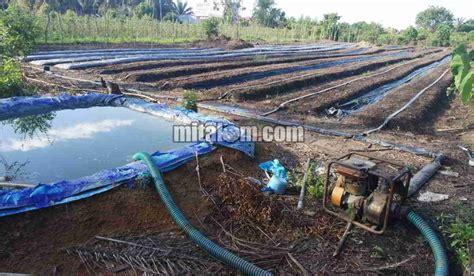 12 cara memasang selang drip drip irigasi tetes di lahan