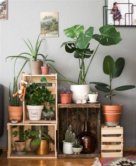 using plants in home decor 17 best images about macetas on pinterest terrace