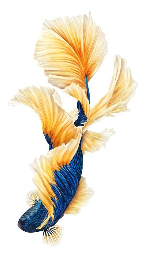 iphone fish wallpapers   pixelstalknet