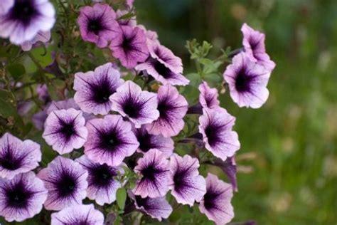 fiori da piantare in giardino fiori e bulbi da piantare ad aprile prepara adesso il tuo