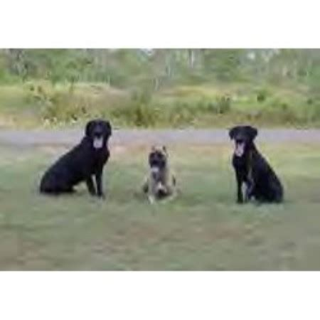 puppy classes wi kennel byonics minnesota wisconsin grantsburg wisconsin 54840