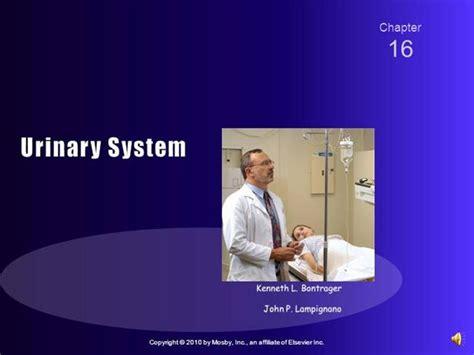 powerpoint templates urinary system urinary system anatomy authorstream