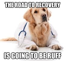 Dog Doctor Meme - funny memes about recovery pictures to pin on pinterest