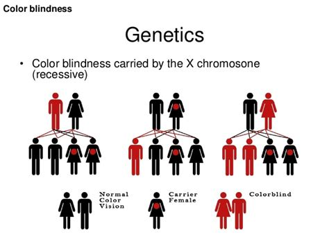 color blindness genetics visual impairments