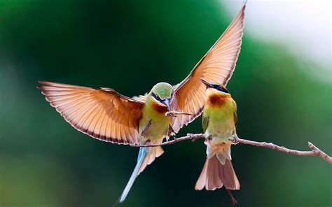 bird couple wallpaper hd birds sharing food wallpaper