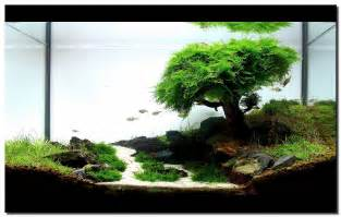 fish tank aquascape designs aquascape of the month september 2008 quot pinheiro manso