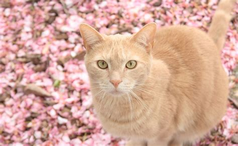 cute pink cat wallpapers cute wallpapers  backgrounds