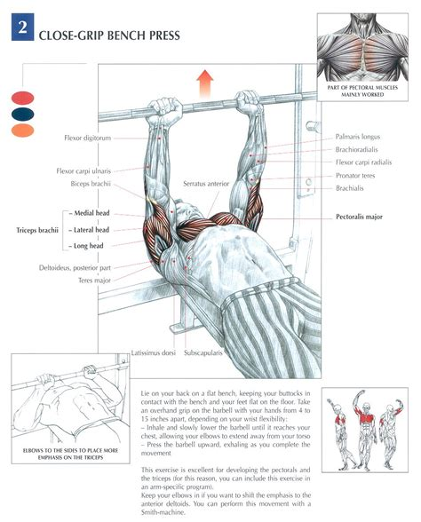 bench press muscle used 1000 images about anatomy physiology of weightlifting