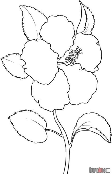 1000 Ideas About Hibiscus Drawing On Pinterest Flower Hibiscus Coloring Page