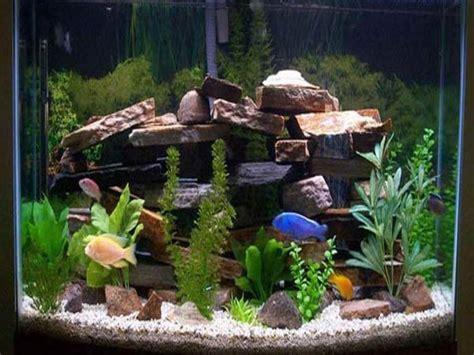 aquarium decoration ideas freshwater 17 best images about freshwater aquariums on pinterest