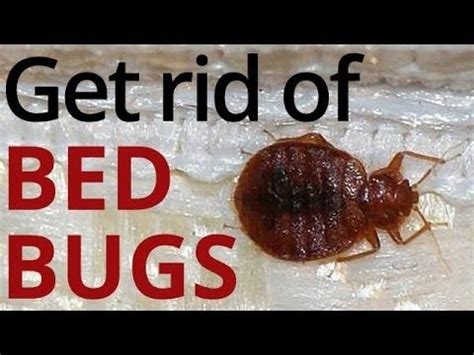 get rid of bed bugs fast and easy how to get rid of bed bugs in just 4 easy steps bed bug