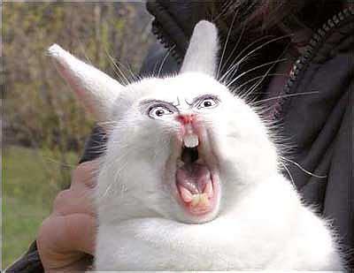 Angry Bunny Meme - angry rabbit
