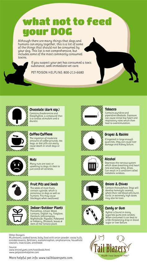 what to feed dogs all about dogs issue
