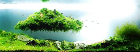 aquascape style legendary aquarist takashi amano aquarium architecture