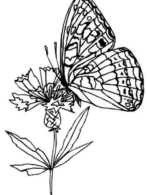 disegni sui fiori disegno farfalla da colorare disegno farfallina sui fiori
