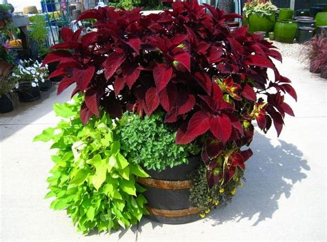 Ideas For Container Gardens Container Garden Placement Learn How To Plant A Container