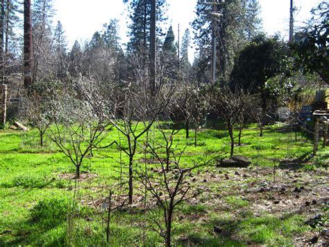 backyard fruit orchard 100 backyard fruit orchard why are american
