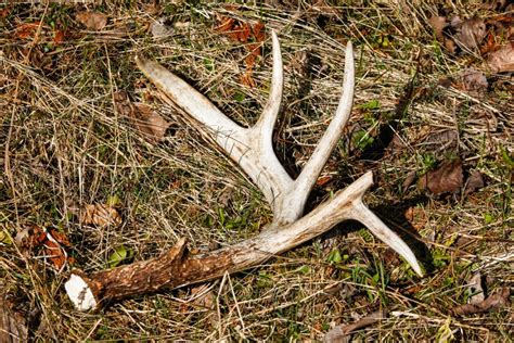 how to your to shed hunt must gear for the shed enthusiast the sporting shoppe