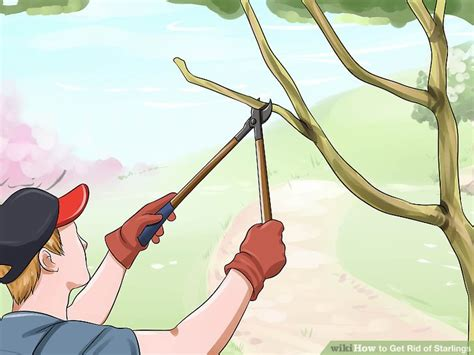 4 ways to get rid of starlings wikihow