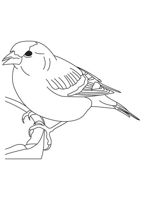 coloring page of house sparrow sparrow coloring pages coloring home