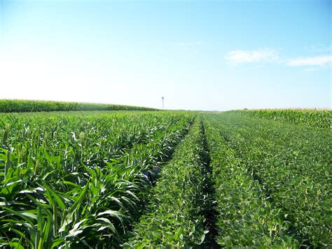 In Crop by Crop Water Use Comparison Study Jenreesources S