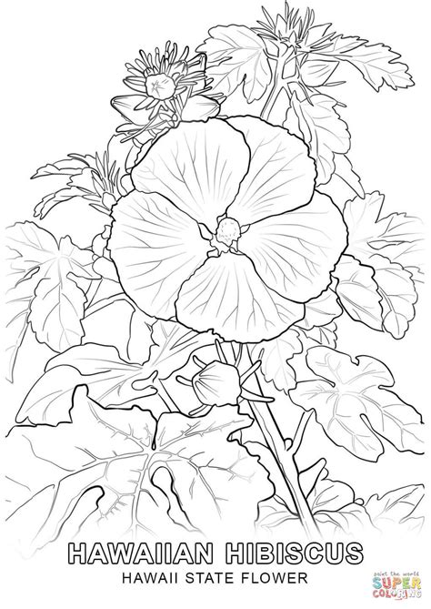 Hawaii State Flower coloring page | Free Printable