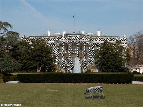 zebra house zebra house zebra white house pictures