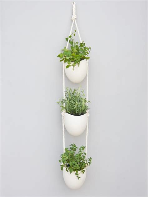 wall mounted herb garden 5 indoor herb garden ideas hgtv s decorating design