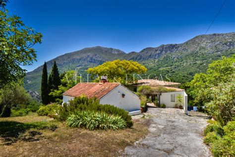 farm for sale in spain vineyards and olive farms for sale in casares country