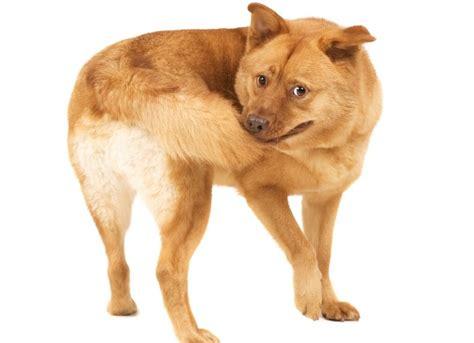 normal puppy behavior compulsive disorder ocd in dogs strange behavior petmd