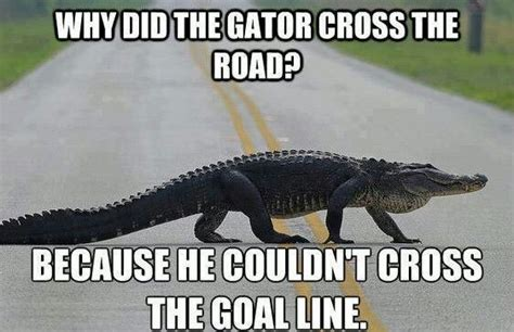 Funny Florida Gator Memes - gators suck sports pinterest