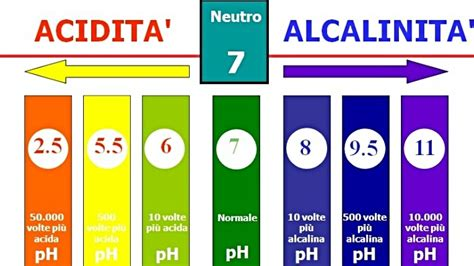 tabella ph alimenti squilibrio acido basico l origine di ogni malattia