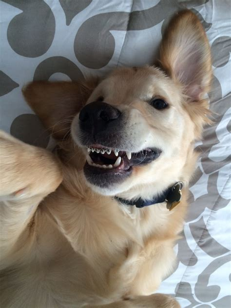 puppy braces puppy with braces is taking the by by spreading smiles around the world