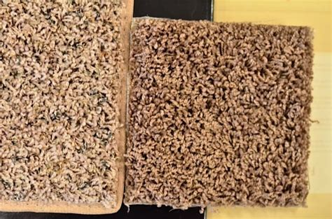 Shag Berber Carpet by How To Choose The Right Style Amp Color Of Carpet