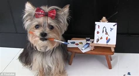 misa minnie yorkie misa the yorkie exhibits many talents from painting to skateboarding in an