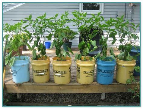 Indoor Container Vegetable Garden Indoor Container Vegetable Garden