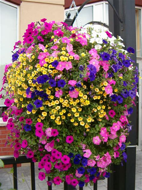 hanging flower planters bloom master australia simply the finest most