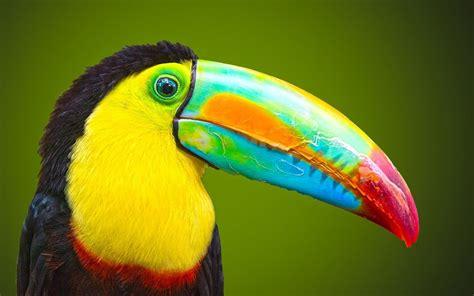 Birds Top top ten beautiful birds top 10 the most beautiful birds