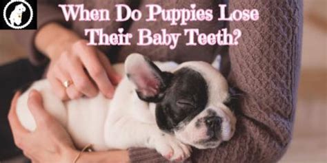 what age do puppies lose their baby teeth master groomer margarita chung joins s bathhouse for pets harlem