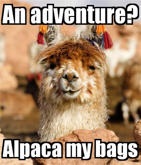 Alpaca My Bags Meme - contest let s talk in pun memes random acts of amazon