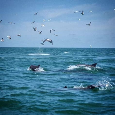 boat rentals north myrtle beach dolphin tours myrtle beach action water sportz jet ski