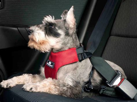 best car harness the 10 best cars for dogs autobytel