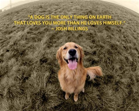how to love your dog golden retrievers inspirational dog quotes golden retrievers quotesgram