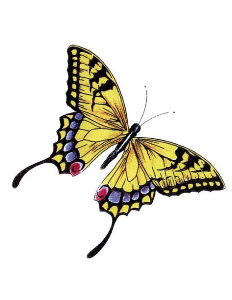 monarch design yellow monarch butterfly tattoo free design ideas